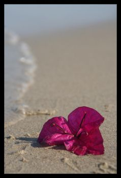 petals on the sand by Xio-xenna