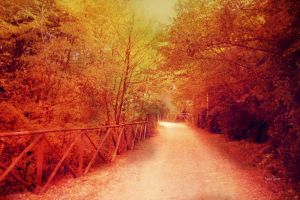 Road to Autumn by LuizaLazar