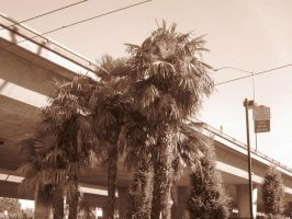 21st Century Sepia: Palm Trees by cillanoodle