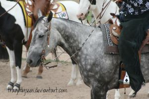 Quarter Horse Stock 83 by tragedyseen