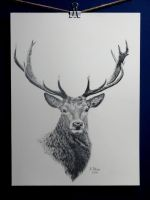 Stag by thetoiowo
