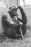 The Thinker by Eye-In-Vision