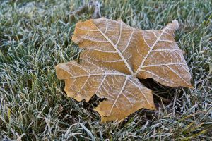 frosted leaf by bimjo