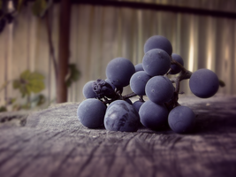 Grapes by nightmangf