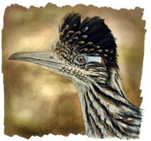 Greater Roadrunner by RiverRaven
