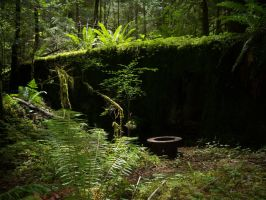 Forest stock 1 by Scars-Stock