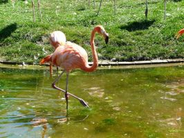Flamingo 14 by Unseelie-Stock