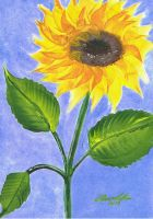 Sunflower by Abaez40
