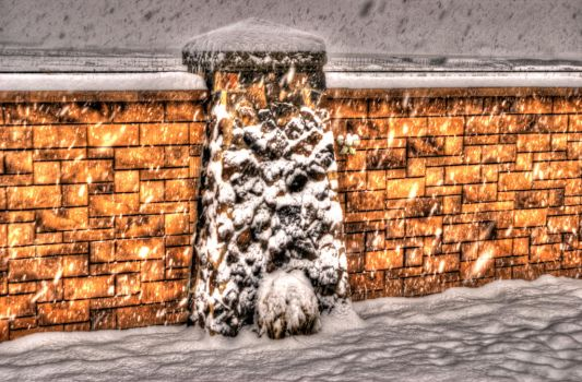 Snow Wall by nomisdice