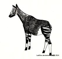 Okapi by Ludifico