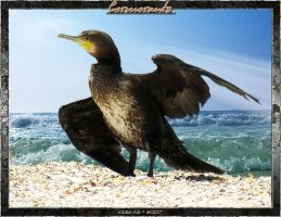 Cormorants 1.1 by inObrAS