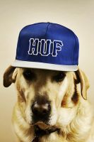 Hiphop Dog by SottoPK
