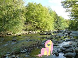 Fluttershy in a Vermont River! by OwenneiL