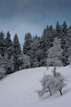 White is the color of fresh milk and snow by Wurstgulasch