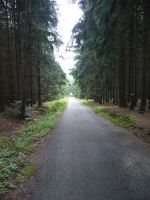Road in the Forest STOCK by Chiron178