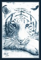 White Tiger by Hal-2012