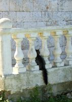 The Place For Kitten Tail by gors