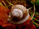 Baby snail ride by michawolf13