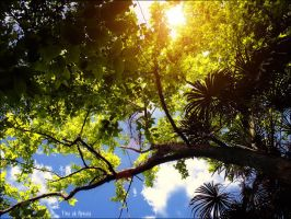 beyond plants and sky by apxaia
