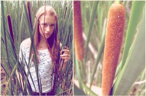 cattail. by smilebiggly04