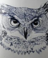 Intense Gaze of the Wizened Owl by african-artist