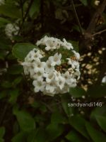Small and White by sandyandi146