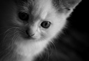 You just want more by MurphyL6