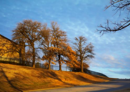 North Past Trees 0163-012117 by KeithPurtell