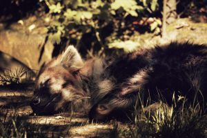 Sleeping Hyena by Veavictis