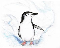 Penguin by i-want-the-red-one