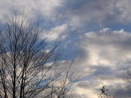 Sky and Trees 011 by Party-Hat-Cat