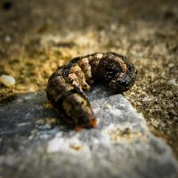 Caterpillar With Opened Mouth by Youcef07