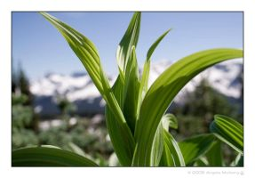 Green Plant by Astraea-photography