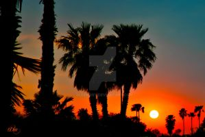 Tropical Sunset Bayview Tx 2 by DleeKirby