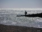 Just fishing by ancoben