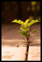 Persistence for Light by TeaPhotography