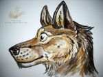 German Shepard Sketch - with colors by Wolf-Spirit89
