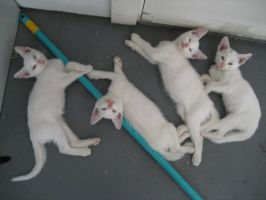 We like our broom...stick by catz101