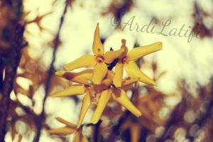 FLOWER by ArdiLatifi