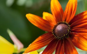 Orange Flower by miroslav-petrinec