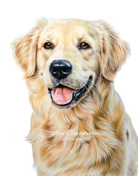 'Hente' colored pencil portrait by Tinesdierportretten