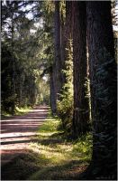 Forest road... _3_ by my-shots