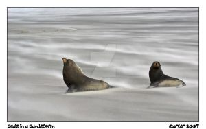 Seals in a Sandstorm by carterr