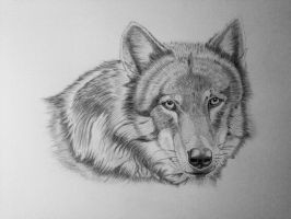 Wolf portrait by Ned-The-Hat