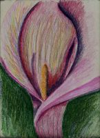 Calla Lily by faryewing