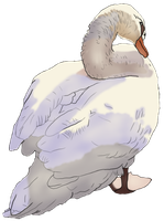 Swan- Colored by 8i-Emmz-i8