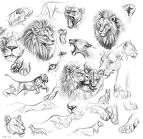 Lions by Maquenda
