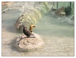 .: Wroclaw - pigeon :. by alter-persona