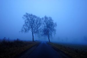 morning in blue by augenweide