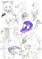 Zoo Doodles by Rhinne